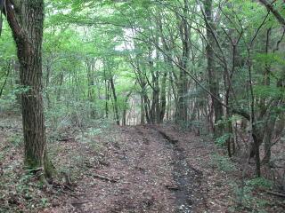 「ゴンドーの森」生い茂る木々を縫うように続くコース